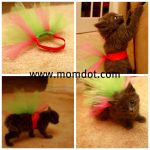 How to make a tutu…for your kitten.