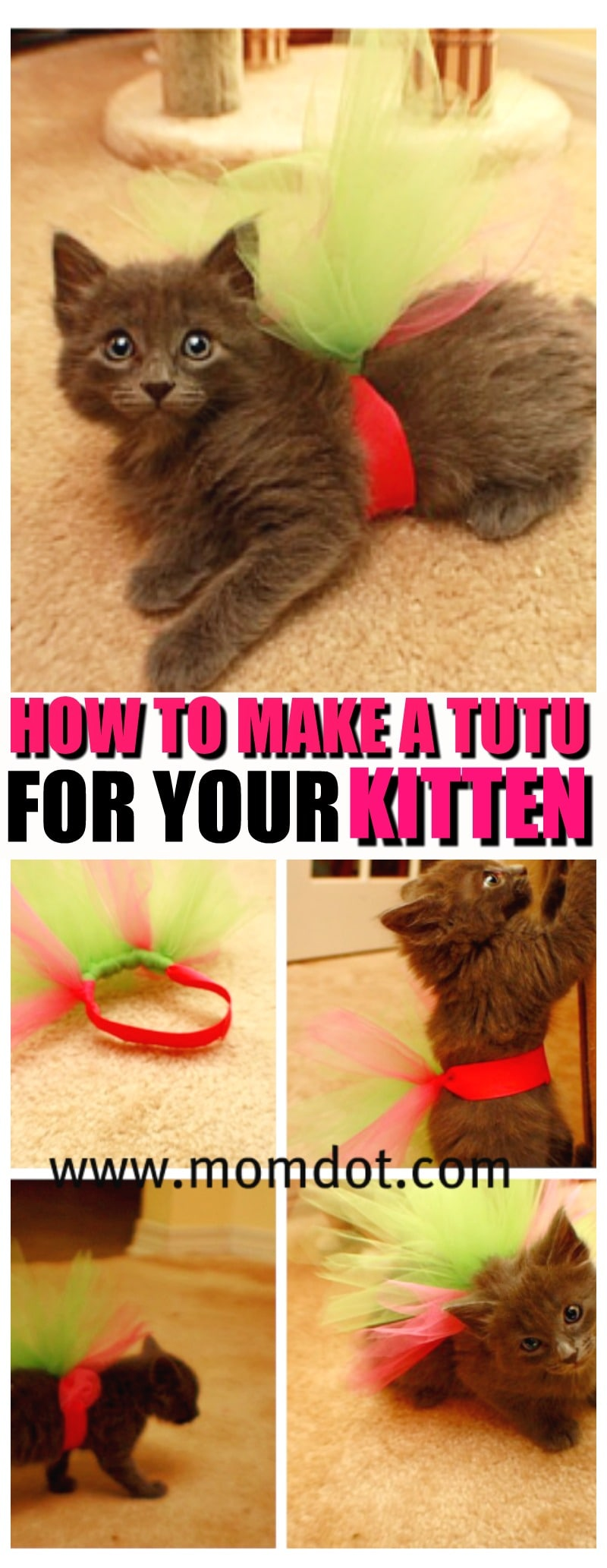 Kitten in a Tutu | How to make a tutu for your kitten | Tutu Tutorial