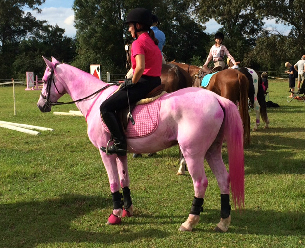 pink breast cancer awareness horse