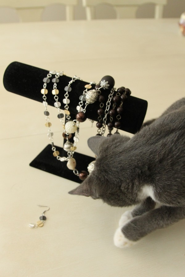 cat playing with jewelry