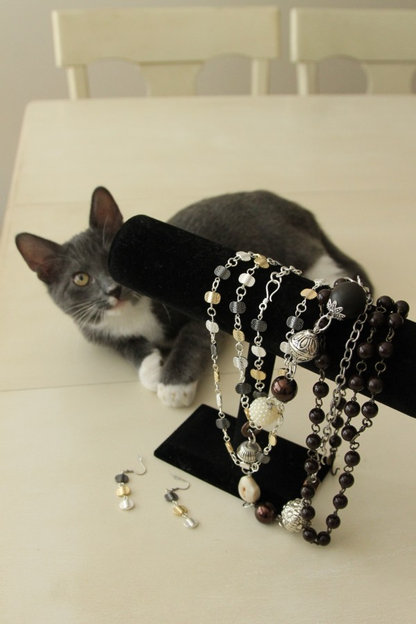 gray cat and jewelry