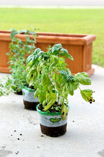 Indoor Spice Garden for your Kitchen, easy to make