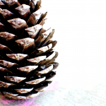 Preschool Friendly Pine Cone Craft: Fall Fun!