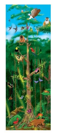 rain forest puzzle