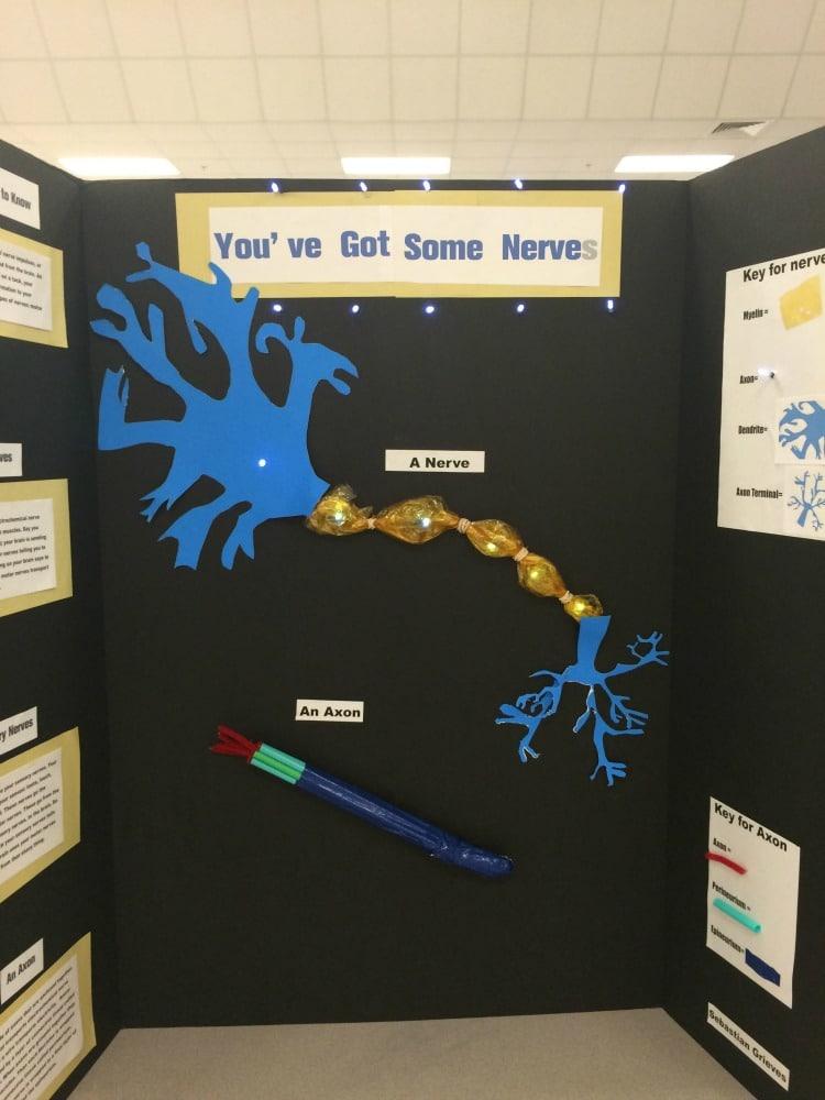 Science Fair Project Ideas (35)