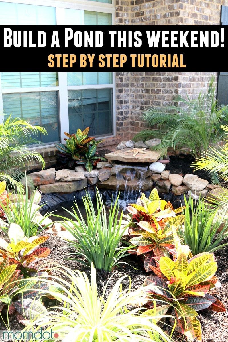 Build a Pond DIY
