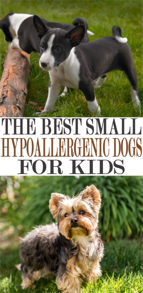 the best small hypoallergenic dogs for kids in 2019 momdot
